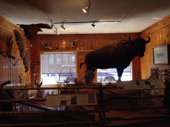 Jackson Hole Museum: photo6.jpg