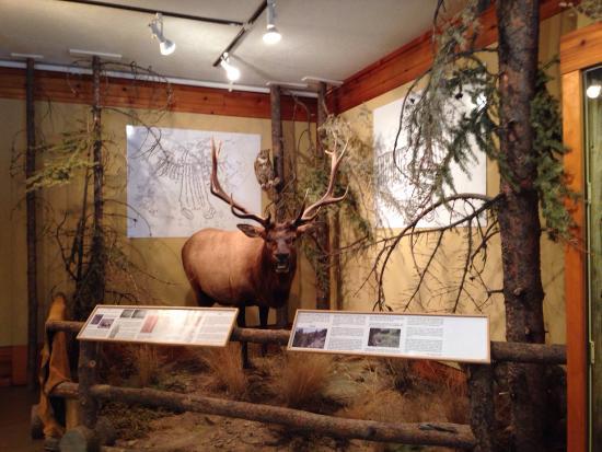 Jackson Hole Museum: photo8.jpg