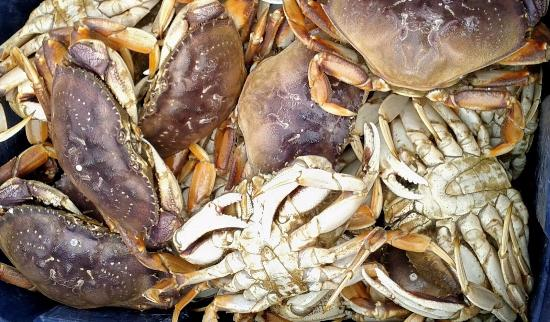 Garibaldi, Oregón: Pick up crab pots and crabs after finishing with limits of rock fish!!  =)