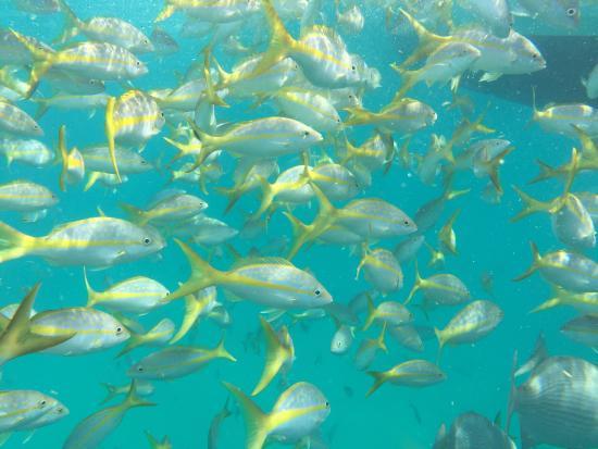 Coffins Patch Snorkeling - Florida Keys Snorkel Dives