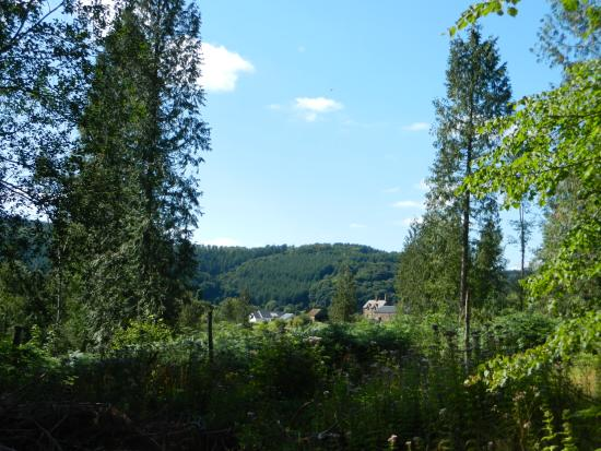 Mitcheldean, UK: View of cottages from forest