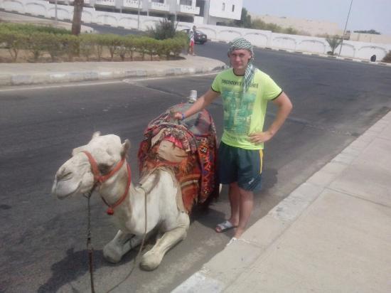 Shores Aloha Resort: египетская корова