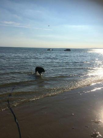 Is Black Rock Sands Beach Dog Friendly