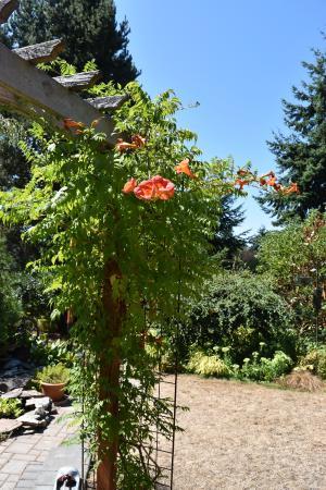 Seahurst Garden Studio: Backyard 4