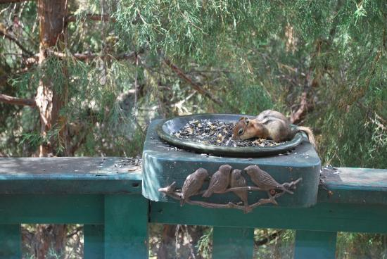 Barbara's B&B: Ground squirrel having breakfast too!!