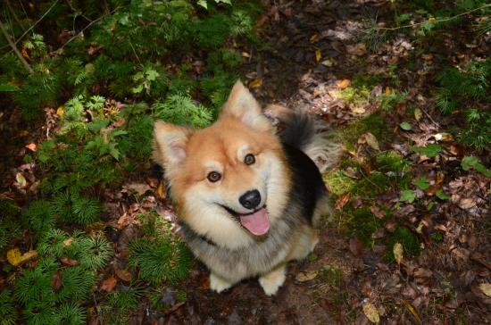 Black Rock Mountain State Park: Dog Friendly Camping too. Wonton loved it!