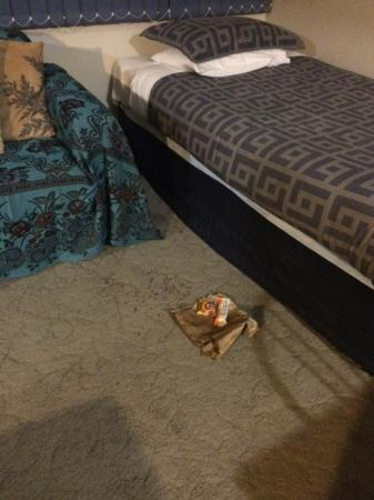 Lakefront Resort Rotorua: Disappointed to find this rubbish/food left in room.