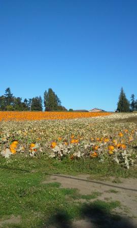 Lochside Regional Trail: September scenes