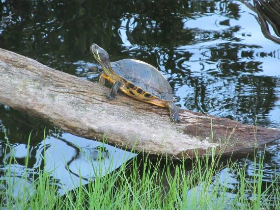 Mount Gilead, OH: State Lakes Resident
