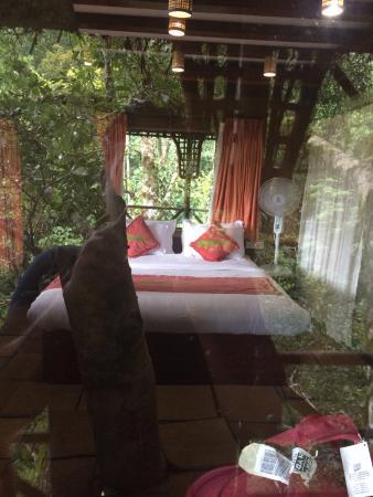 luxury tree house resort. Vythiri Resort: Amazing Luxury Tree House Room View, At 100ft Resort