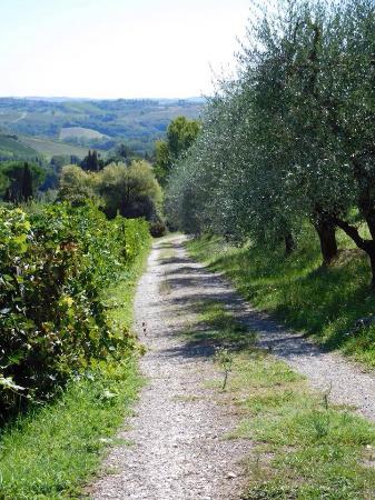 Guardastelle Vineyard: The lane