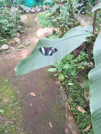 Nathaly Butterfly Garden: big one