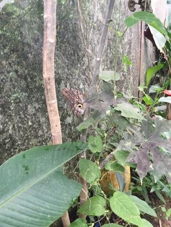 Nathaly Butterfly Garden: owl one