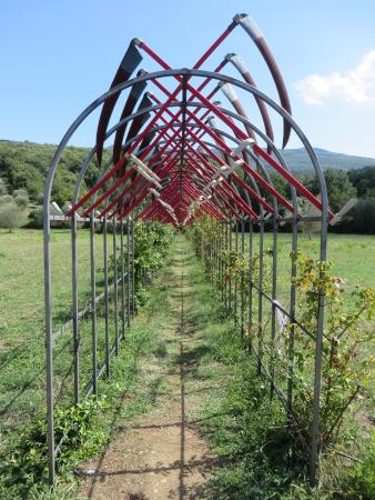 Orchidee picture of il giardino di daniel spoerri seggiano tripadvisor - Giardino di daniel spoerri ...