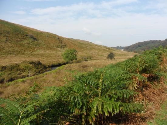 Twitchen Farm: Views of our walk