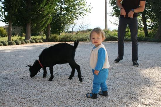 Colonzelle, França: Un petit bouc de la ferme