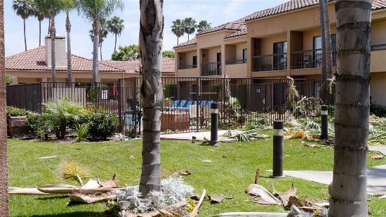 Courtyard Anaheim Buena Park: Tree pruning in progress
