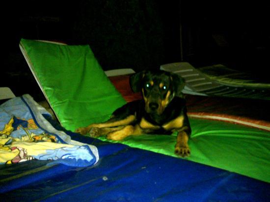 Karsiyaka, Kypros: Kutya a medence körüli napozóágyakon este