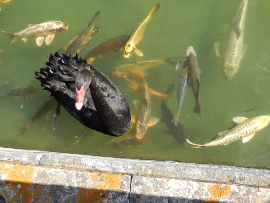 Palácio dos Marqueses de Fronteira: Avec les poissons
