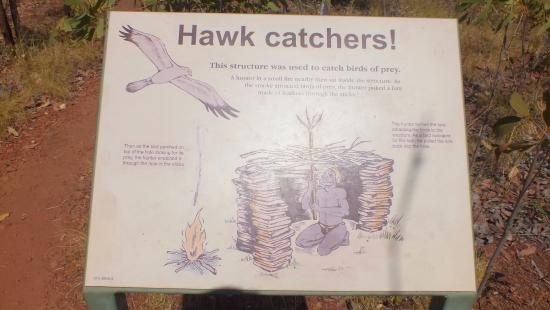 Keep River National Park: Aboriginal Hawkcatcher.