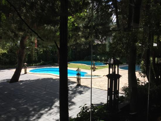 Jard n picture of thai garden 2112 madrid tripadvisor for Restaurant jardin thai