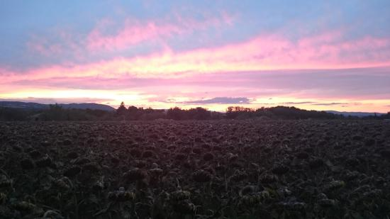 Auberge la Plaine : Coucher de soleil sur les tournesols