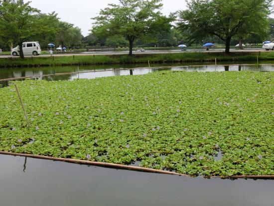 Water Castle Park
