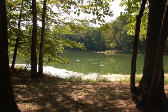 Leesburg, فيرجينيا: Picnic area