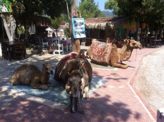 Kayakoy to Oludeniz Walking Trail: deveciklerr 2