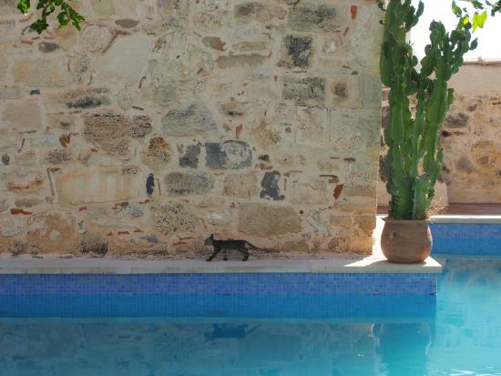 Villa Kerasia: Kitten by the pool