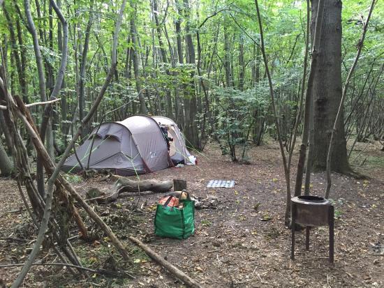 Badgells Wood Camping