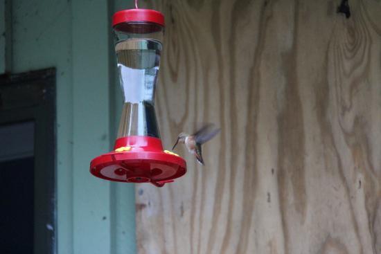 Meares Retreat Bed & Breakfast: Kolibris