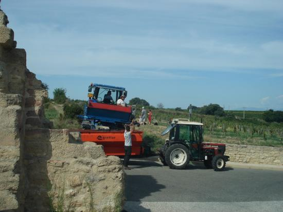 Provence and Wine : Hand-picked raisins