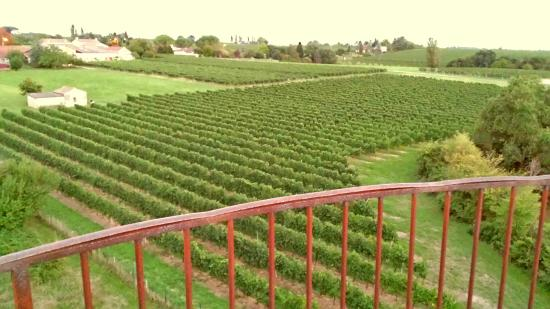 Gensac, Γαλλία: View of the Vineyards from the Roof
