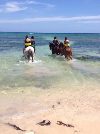 Half Moon Equestrian Center: Into the Caribbean Sea we go
