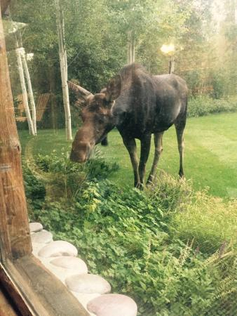 Wildflower Lodge at Jackson Hole: Wildlife!