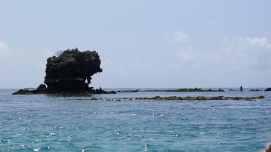 Pole Pole Bungalows: Snorkeling