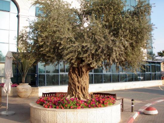 Central Park Eilat: מלון רימונים סנטראל פארק אילת