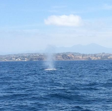 Dana Point, Kalifornia: Blueback spouting