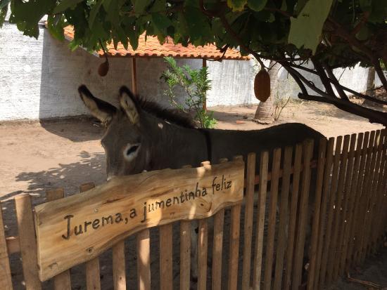 Viveiro Tracoa: Local bem limpo e animais bem cuidados