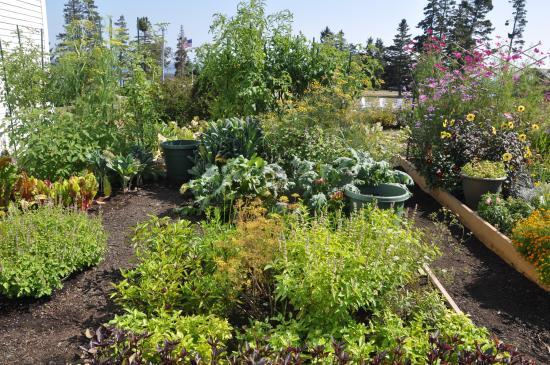 Newagen, เมน: herb garden