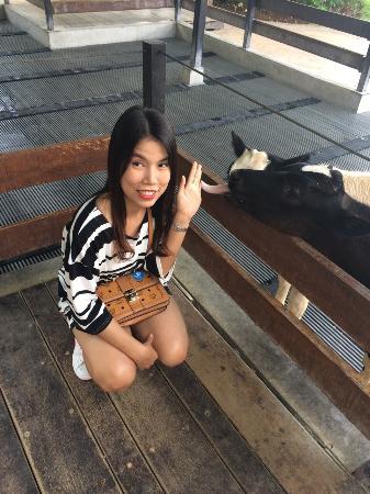 Farm Chokchai Campground