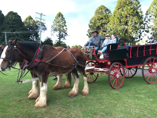 Dalby, Australia: Bunya Mountains horse & carriage