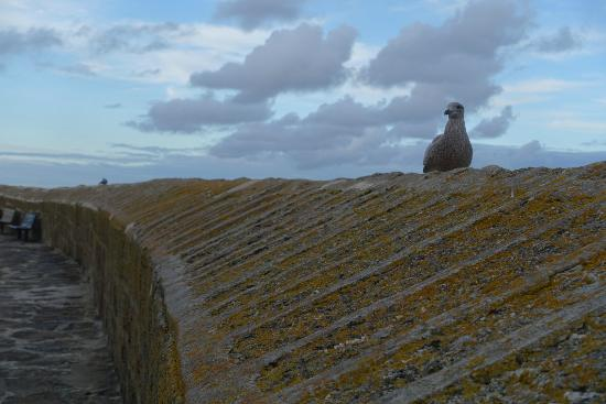 Crows-an-Wra, UK: Local guard at the Mousehole