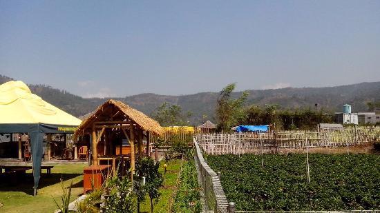 Kebun Strawberry Picture Of Purnama Hotel Malang Tripadvisor