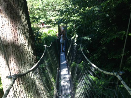 UBC Botanical Garden Canopy walk & Greenheart Canopy Walk - Picture of UBC Botanical Garden ...