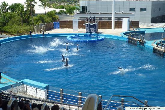 Entrada picture of oceanografic valencia valencia Entradas aquarium valencia