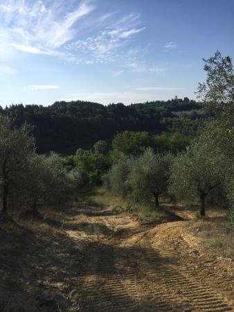 Al Gelso Bianco Farm-Holiday Resort: photo5.jpg