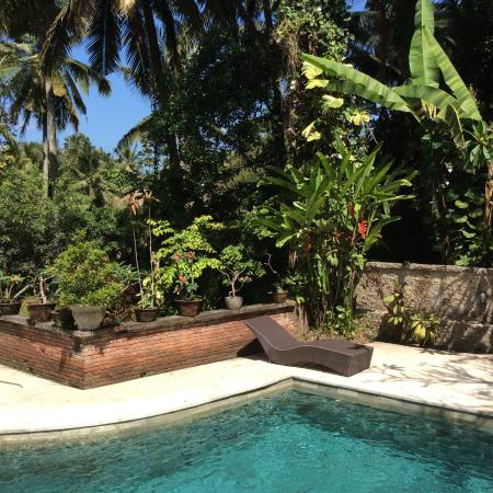 Kebun Indah: The pool