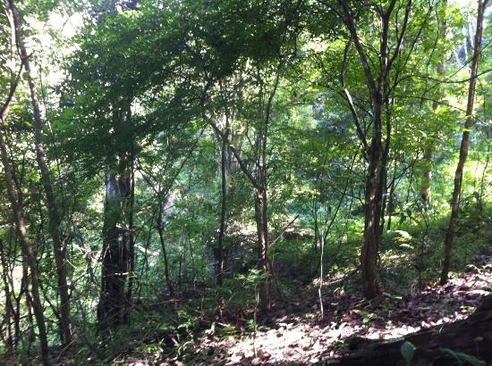 Jungle Palace Homestay: Reserva de Tigres Periyar